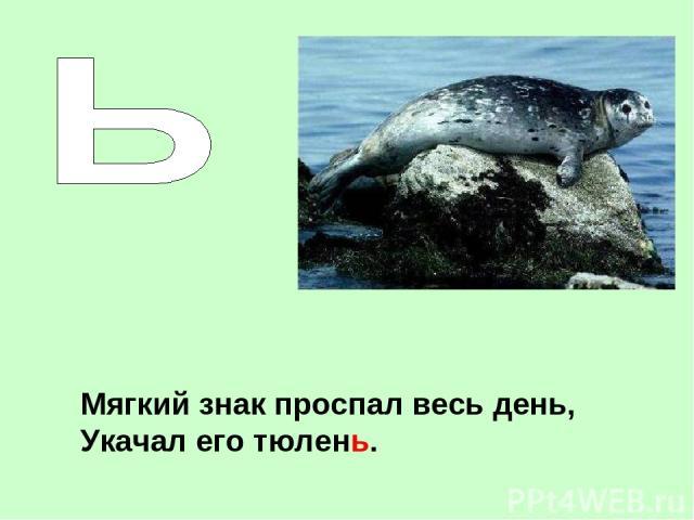 Мягкий знак проспал весь день, Укачал его тюлень.