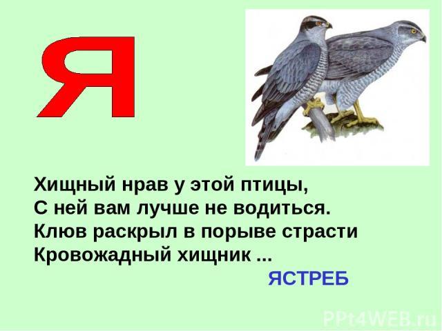 Хищный нрав у этой птицы, С ней вам лучше не водиться. Клюв раскрыл в порыве страсти Кровожадный хищник ... ЯСТРЕБ