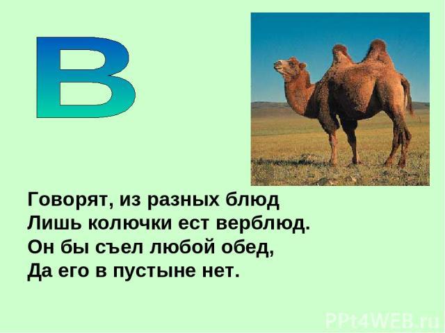 Говорят, из разных блюд Лишь колючки ест верблюд. Он бы съел любой обед, Да его в пустыне нет.