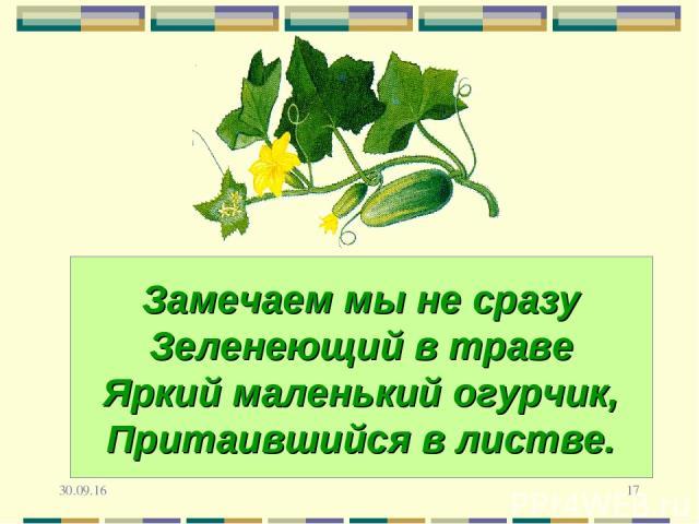 * * Замечаем мы не сразу Зеленеющий в траве Яркий маленький огурчик, Притаившийся в листве.