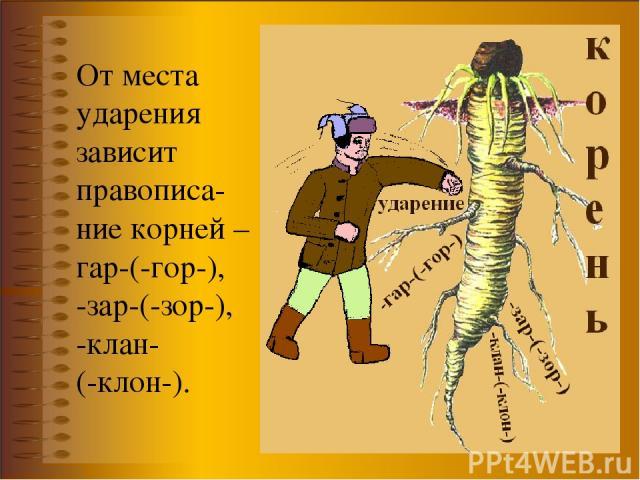 От места ударения зависит правописа-ние корней –гар-(-гор-), -зар-(-зор-), -клан- (-клон-).