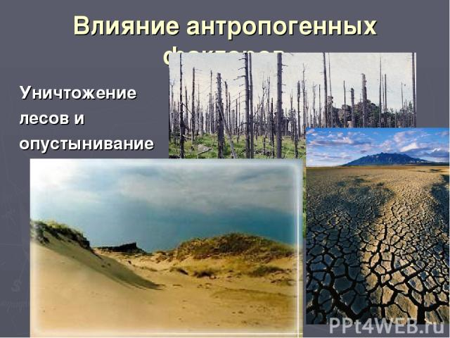 Влияние антропогенных факторов Уничтожение лесов и опустынивание
