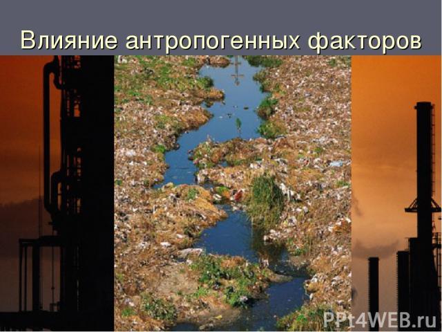 Влияние антропогенных факторов Загрязнение среды вредными веществами
