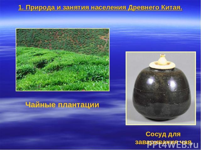 * Чайные плантации Сосуд для заваривания чая 1. Природа и занятия населения Древнего Китая.