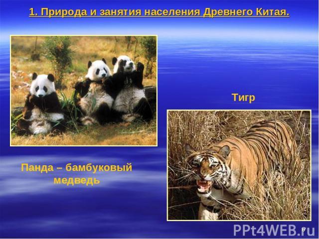 * Панда – бамбуковый медведь Тигр 1. Природа и занятия населения Древнего Китая.