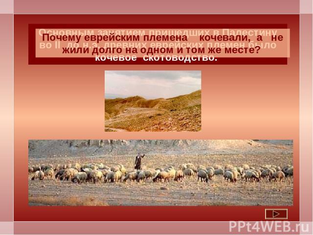 Основным занятием пришедших в Палестину во II до н.э. древних еврейских племен было кочевое скотоводство. Почему еврейским племена кочевали, а не жили долго на одном и том же месте?