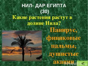 НИЛ- ДАР ЕГИПТА (30) Какие растения растут в долине Нила? Папирус, финиковые пал