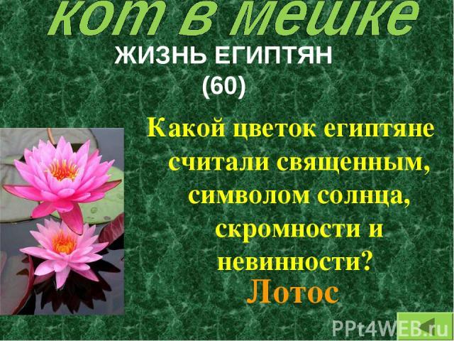 ЖИЗНЬ ЕГИПТЯН (60) Какой цветок египтяне считали священным, символом солнца, скромности и невинности? Лотос