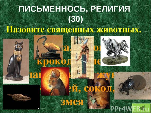ПИСЬМЕННОСЬ, РЕЛИГИЯ (30) Назовите священных животных. Кошка, корова, крокодил, лев, павиан, ибис, жук- скарабей, сокол, змея
