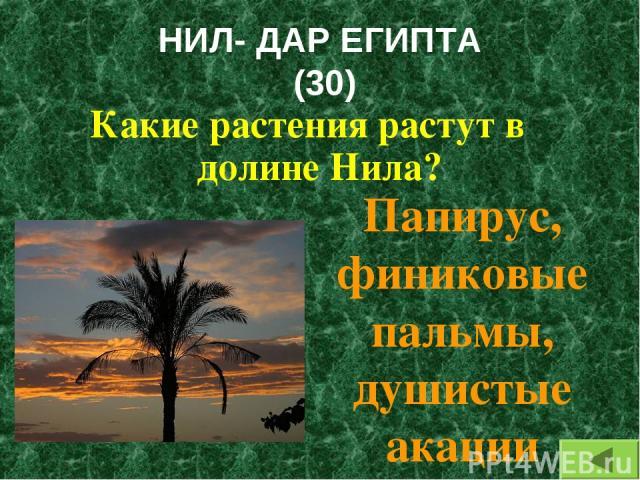 НИЛ- ДАР ЕГИПТА (30) Какие растения растут в долине Нила? Папирус, финиковые пальмы, душистые акации