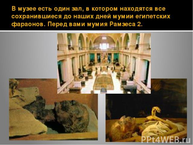 В музее есть один зал, в котором находятся все сохранившиеся до наших дней мумии египетских фараонов. Перед вами мумия Рамзеса 2.