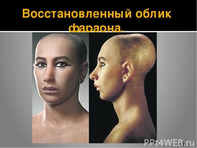 Восстановленный облик фараона.