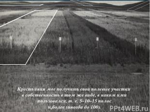 Крестьянин мог получить свои полевые участки в собственность в том же виде, в ка
