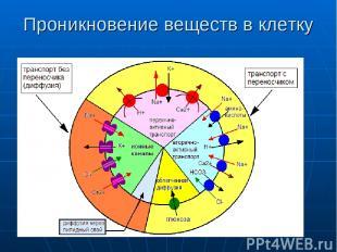 Проникновение веществ в клетку