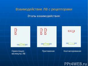 Взаимодействие ЛВ с рецепторами Этапы взаимодействия: Ориентация молекулы ЛВ При