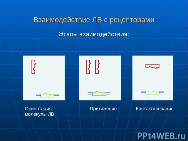 Взаимодействие ЛВ с рецепторами Этапы взаимодействия: Ориентация молекулы ЛВ Притяжение Контактирование
