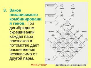 * Закон независимого комбинирования генов. При дигибридном скрещивании каждая па