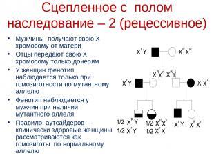 Мужчины получают свою Х хромосому от матери Отцы передают свою Х хромосому тольк