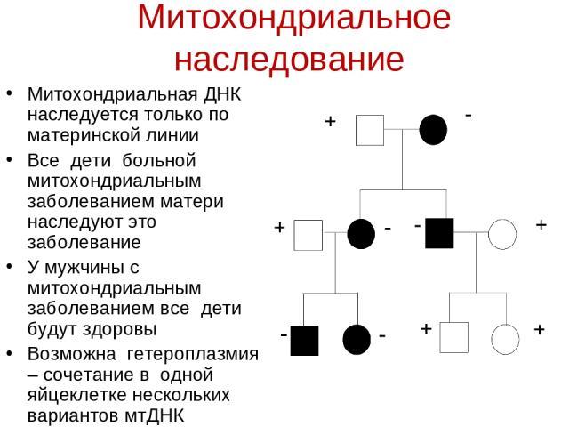 Митохондриальное наследование Митохондриальная ДНК наследуется только по материнской линии Все дети больной митохондриальным заболеванием матери наследуют это заболевание У мужчины с митохондриальным заболеванием все дети будут здоровы Возможна гете…