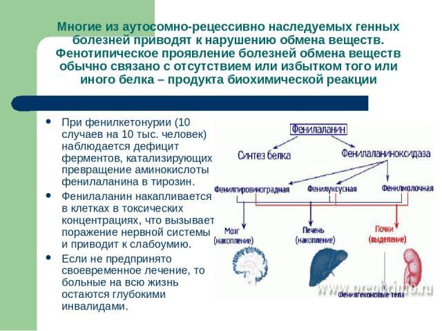 Многие из аутосомно-рецессивно наследуемых генных болезней приводят к нарушению обмена веществ. Фенотипическое проявление болезней обмена веществ обычно связано с отсутствием или избытком того или иного белка – продукта биохимической реакции При фен…