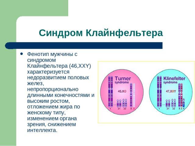 Синдром Клайнфельтера Фенотип мужчины с синдромом Клайнфельтера (46,ХХY) характеризуется недоразвитием половых желез, непропорционально длинными конечностями и высоким ростом, отложением жира по женскому типу, изменением органа зрения, снижением инт…