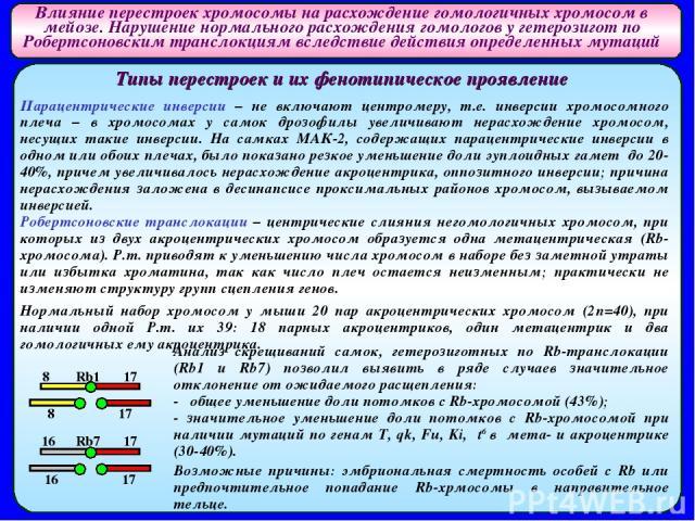 Влияние перестроек хромосомы на расхождение гомологичных хромосом в мейозе. Нарушение нормального расхождения гомологов у гетерозигот по Робертсоновским транслокциям вследствие действия определенных мутаций Типы перестроек и их фенотипическое проявл…