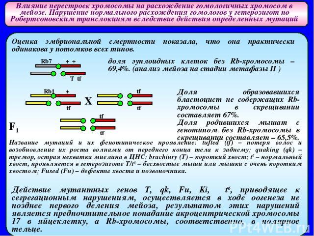 Влияние перестроек хромосомы на расхождение гомологичных хромосом в мейозе. Нарушение нормального расхождения гомологов у гетерозигот по Робертсоновским транслокциям вследствие действия определенных мутаций Оценка эмбриональной смертности показала, …