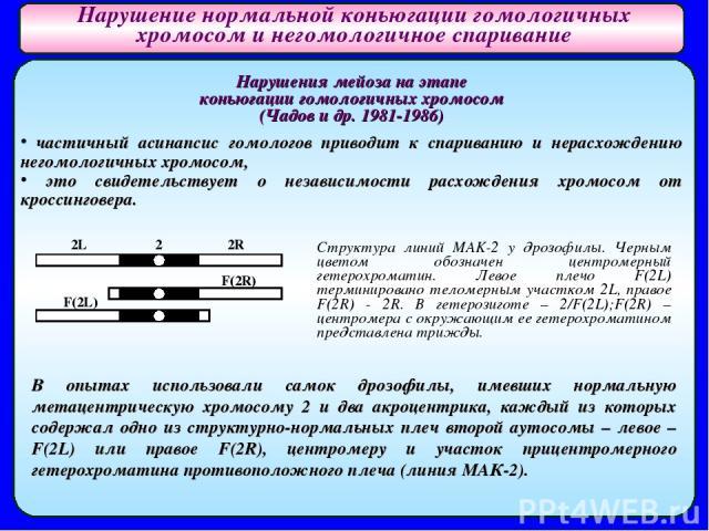 Нарушения мейоза на этапе коньюгации гомологичных хромосом (Чадов и др. 1981-1986) частичный асинапсис гомологов приводит к спариванию и нерасхождению негомологичных хромосом, это свидетельствует о независимости расхождения хромосом от кроссинговера…