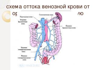 схема оттока венозной крови от органов ЖКТ в портальную систему