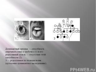 Доминантный признак — способность свертывать язык в трубочку (1) и его рецессивн