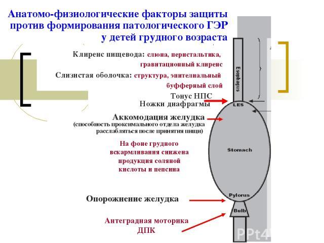 Сниженная выработка карбоангидраз и пепсина