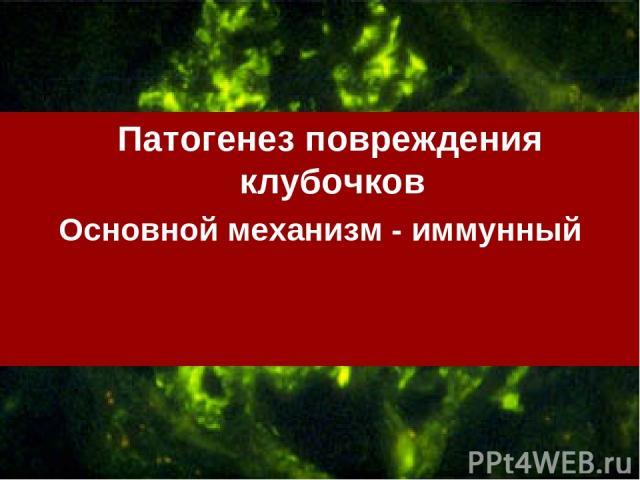 Патогенез повреждения клубочков Основной механизм - иммунный