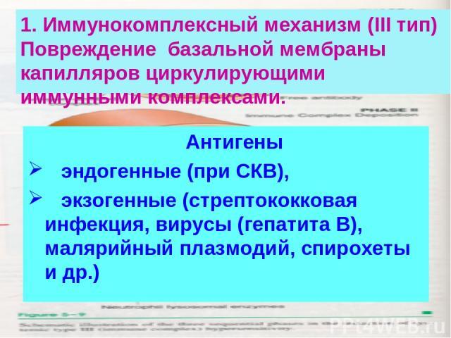 1. Иммунокомплексный механизм (III тип) Повреждение базальной мембраны капилляров циркулирующими иммунными комплексами. Антигены эндогенные (при СКВ), экзогенные (стрептококковая инфекция, вирусы (гепатита В), малярийный плазмодий, спирохеты и др.)