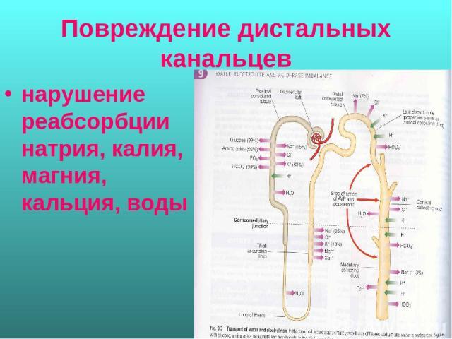 Повреждение дистальных канальцев нарушение реабсорбции натрия, калия, магния, кальция, воды