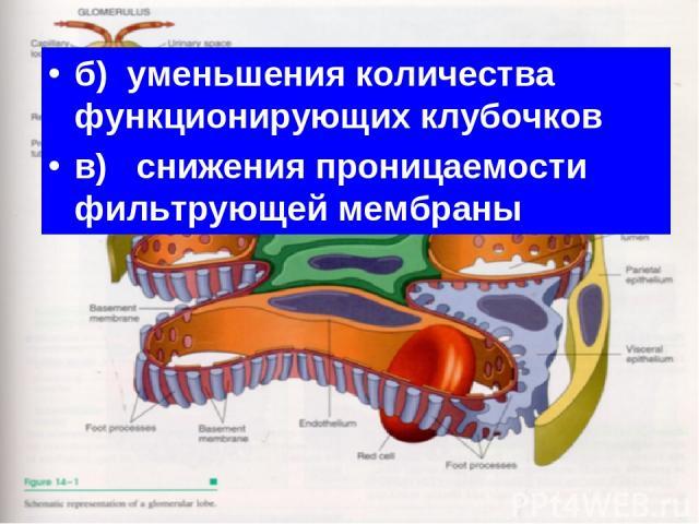 б) уменьшения количества функционирующих клубочков в) снижения проницаемости фильтрующей мембраны
