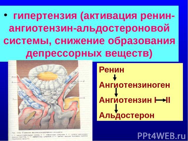 гипертензия (активация ренин-ангиотензин-альдостероновой системы, снижение образования депрессорных веществ) Ренин Ангиотензиноген Ангиотензин I II Альдостерон