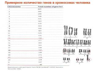 Примерное количество генов в хромосомах человека