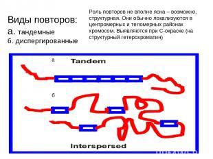 Виды повторов: а. тандемные б. диспергированные а б Роль повторов не вполне ясна