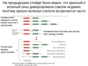 На предыдущем слайде было видно, что красный и зеленый гены дивергировали совсем