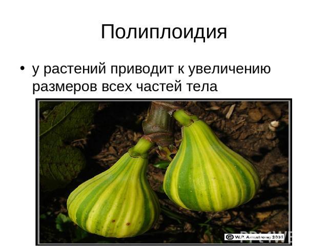 Полиплоидия у растений приводит к увеличению размеров всех частей тела