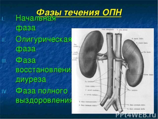 Фазы течения ОПН Начальная фаза Олигурическая фаза Фаза восстановления диуреза Фаза полного выздоровления