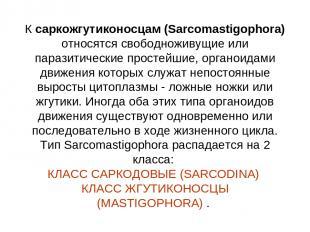 К саркожгутиконосцам (Sarcomastigophora) относятся свободноживущие или паразитич