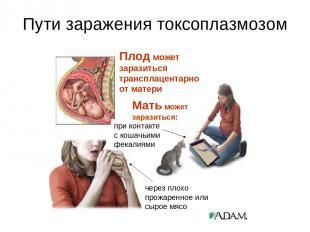 Пути заражения токсоплазмозом через плохо прожаренное или сырое мясо при контакт