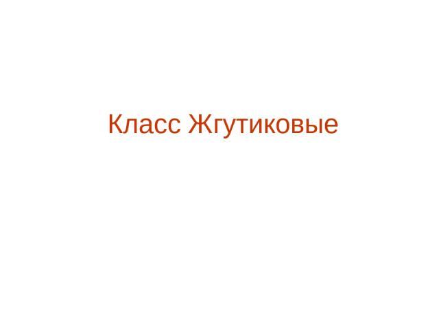 Класс Жгутиковые