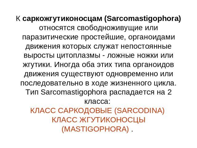 К саркожгутиконосцам (Sarcomastigophora) относятся свободноживущие или паразитические простейшие, органоидами движения которых служат непостоянные выросты цитоплазмы - ложные ножки или жгутики. Иногда оба этих типа органоидов движения существуют одн…