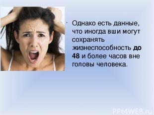 Однако есть данные, что иногда вши могут сохранять жизнеспособность до 48 и боле