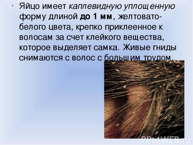Яйцо имеет каплевидную уплощенную форму длиной до 1 мм, желтовато-белого цвета, крепко приклеенное к волосам за счет клейкого вещества, которое выделяет самка. Живые гниды снимаются с волос с большим трудом.