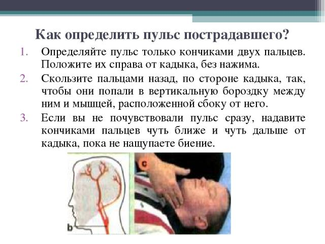 Как определить пульс пострадавшего? Определяйте пульс только кончиками двух пальцев. Положите их справа от кадыка, без нажима. Скользите пальцами назад, по стороне кадыка, так, чтобы они попали в вертикальную бороздку между ним и мышцей, расположенн…