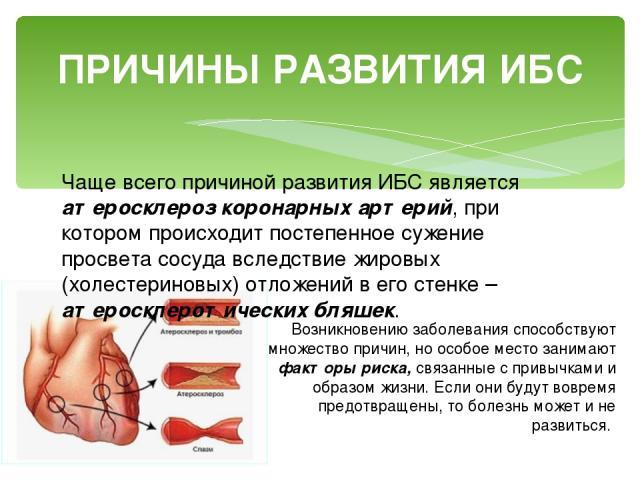 ПРИЧИНЫ РАЗВИТИЯ ИБС Чаще всего причиной развития ИБС является атеросклероз коронарных артерий, при котором происходит постепенное сужение просвета сосуда вследствие жировых (холестериновых) отложений в его стенке – атеросклеротических бляшек. Возни…