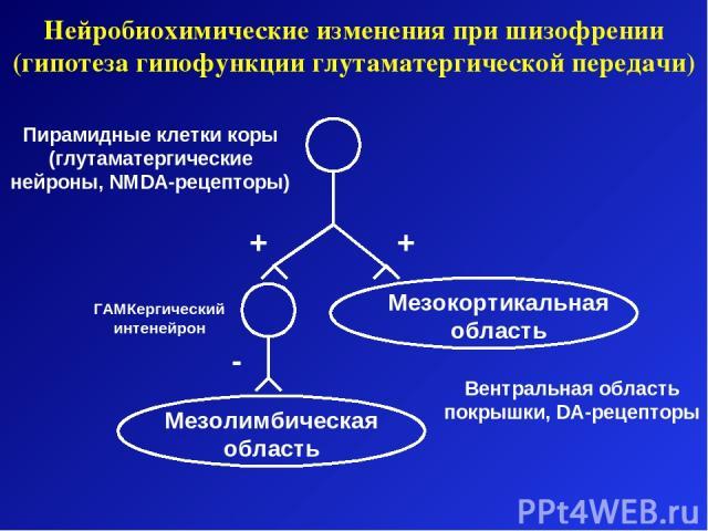 Нейробиохимические изменения при шизофрении (гипотеза гипофункции глутаматергической передачи) Мезокортикальная область Мезолимбическая область ГАМКергический интенейрон + - + Пирамидные клетки коры (глутаматергические нейроны, NMDA-рецепторы) Вентр…